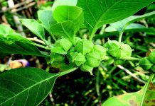 Health benefits of Ashwagandha | Health Tips